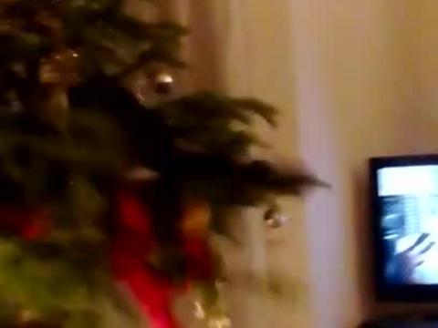 Tannenbaum Lustig.Lustige Tannenbaum Videos Zum Lachen Und Whatsapp