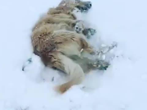 Schnee Lustige Bilder.Lustige Schnee Videos Zum Lachen Und Whatsapp